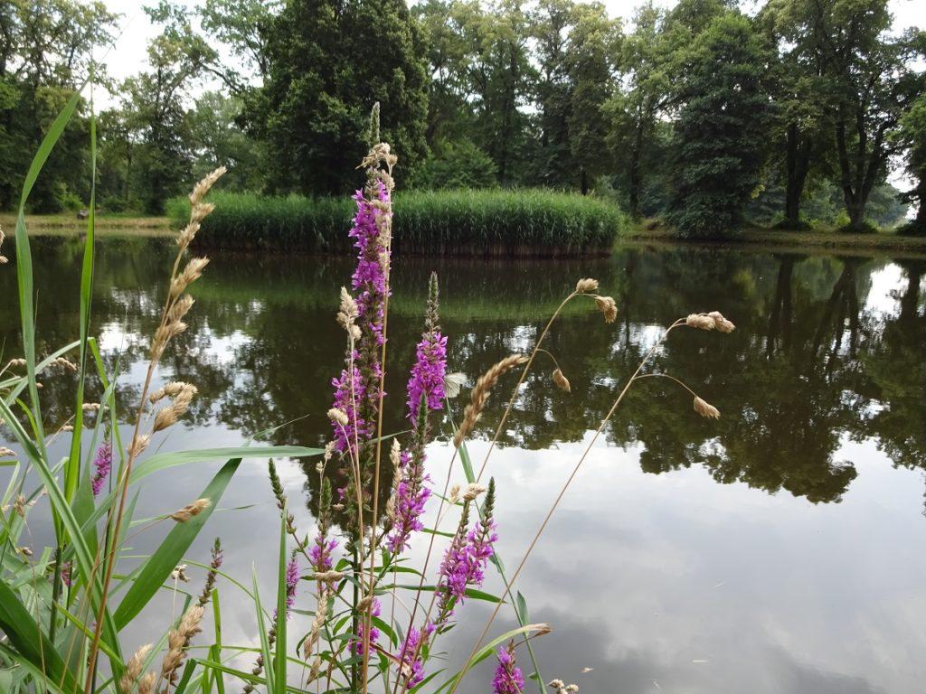 Teich Gemeindeteil Horst