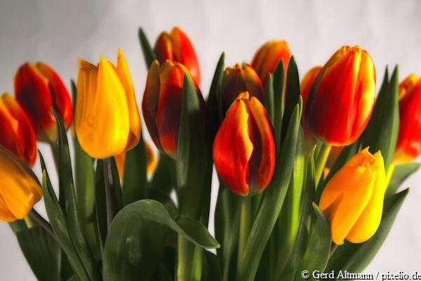 Übergabe eine virtuellen Blumenstraußes bei Gratulation zum Weltfrauentag / Internationalen Frauentages 2011