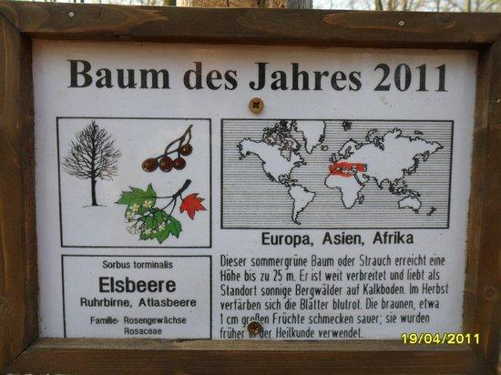 Schild-Aufsteller-für-Baum-des-Jahres-2011--Elsbeere-am-Naturlernpfad-Rote-Brücjke-in-Heiligengrabe
