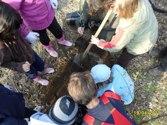 Schülergruppen-pflanzen-Elsbeere-als-Baum-des-Jahres-2011-am-Naturlernpfad-in-Heiligengrabe