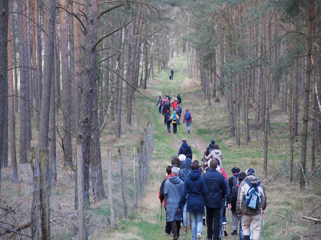 Pilger-Feld-im-wald-auf-annenpfad-zwischen-Boelzke-und-Alt-Kruessow