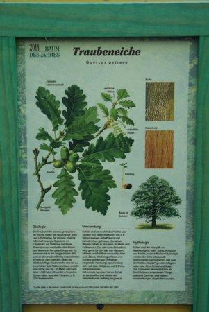 Baum des Jahres 2014 - Traubeneiche - Pflanzung Naturlernpfad Heiligengrabe - 2