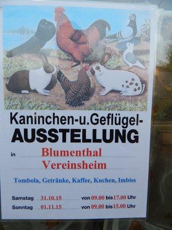 19-51-Kleintierzüchterausstellung-Blumenthal 31.10