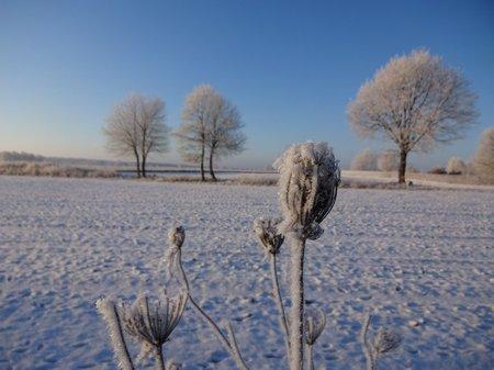 03-Winterbilder 29.01