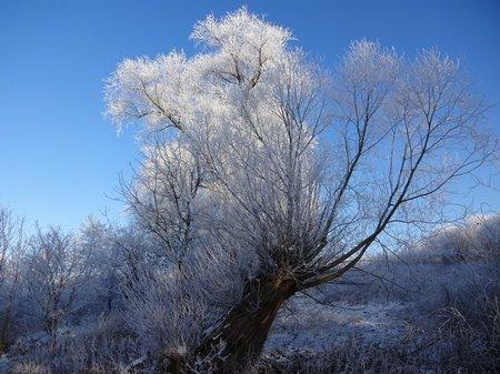 08-Winterbilder 29.01