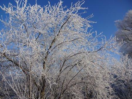 09-Winterbilder 29.01