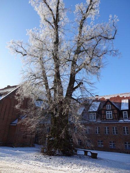 11-Winterbilder 29.01
